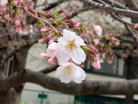 東京都からの営業時間短縮要請に伴う 3月22日(月)〜3月31日(水)の営業