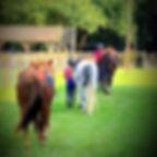 green acres stables llc milton fl riding