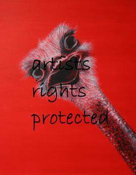 ostrich - red