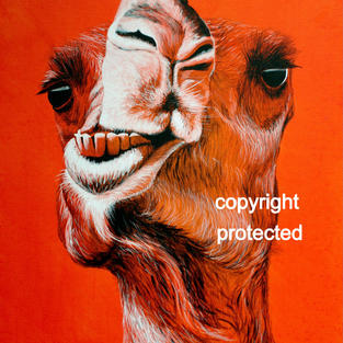 Goofy Camel