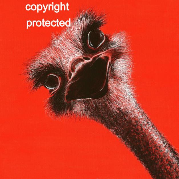 Ostrich - Surprise!