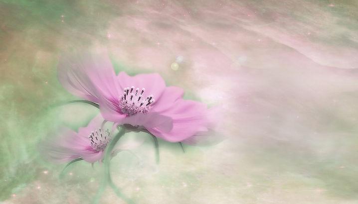 blossom-3054805_1920.jpg