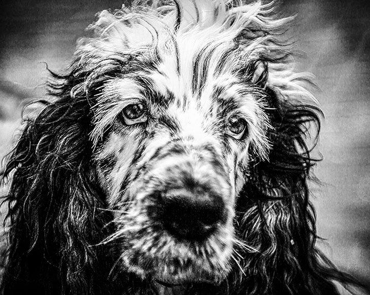 doggydog_hondencrèche.jpg