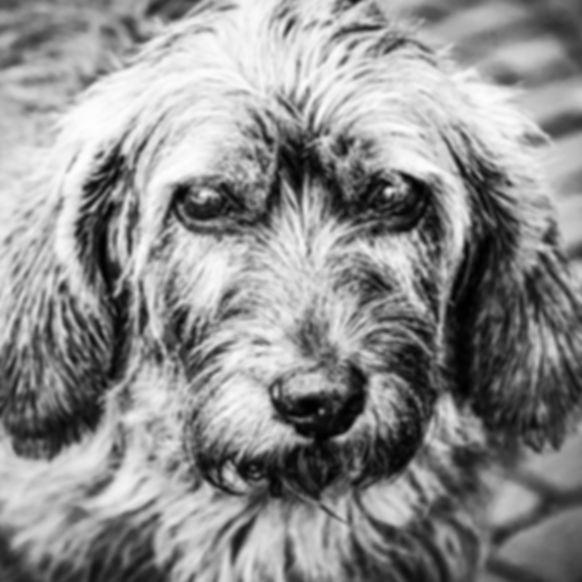 aandoenlijke hond op het rembrandtplein