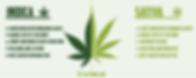 Indica, Sativa, Types of Cannabis, Relaxing, Calm, Uplifting, Euphoric, Mind, Body, Healing, Natural
