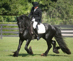 Latcho's Shadow Gypsy Vanner