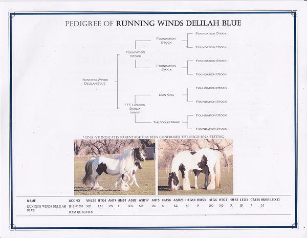 Delilah_Blue_GHA_Registration2_edited.jp