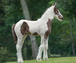 Pearlie Girl Mare