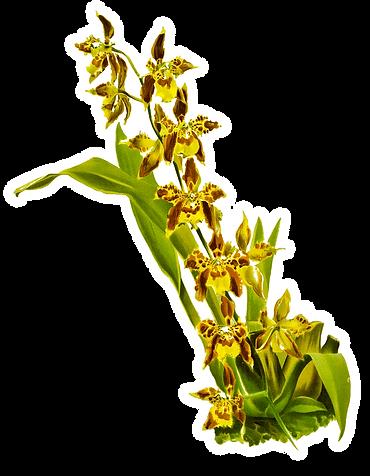 orquidea.png