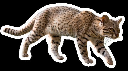 gato-mato-grande.png