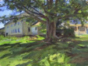 Tom Hughes treehouse (1).jpg