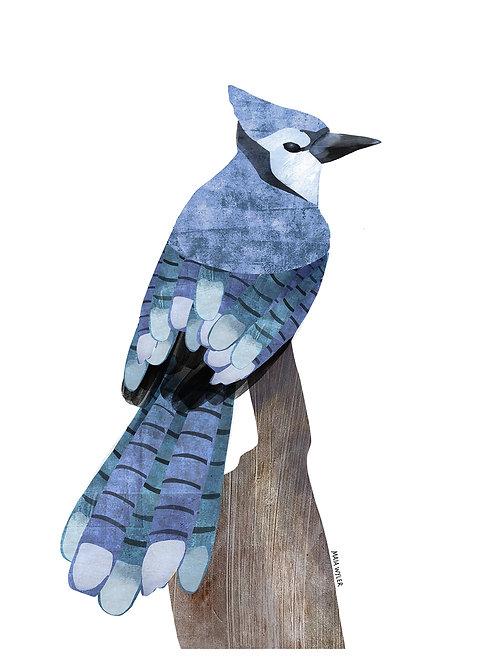 Bird Collection Nº 3