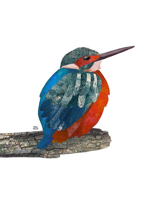 Bird Collection Nº 7