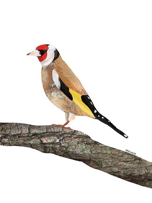 Bird Collection Nº 2