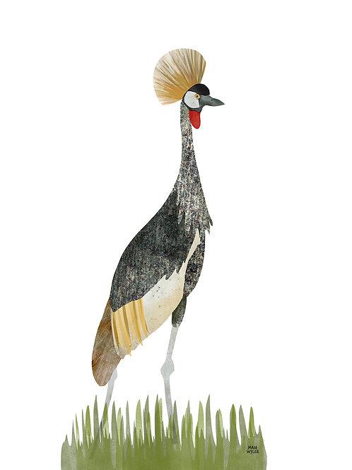 Bird Collection Nº 1