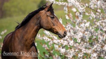 Frühling auf dem Reiterhof Teicha