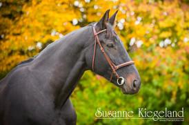 Pferdefotos im Herbst