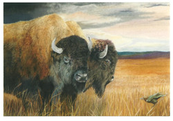 bison and cowbird