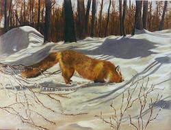 fox #3 winter