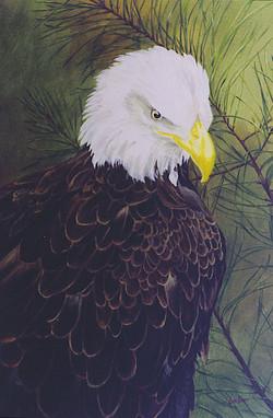 portrait bald eagle