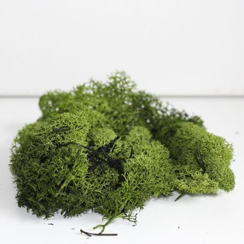 Small Bag Of Reindeer Moss