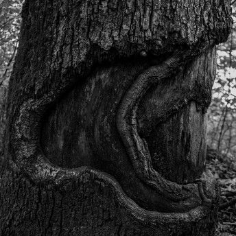 Tree%20trunk_edited.jpg