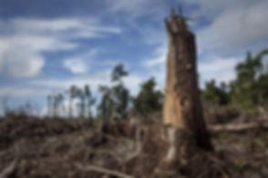 2017-08-30-Deforestation-Indonesia.jpg