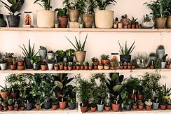 VENUS-PLANTS-THINGS.jpg