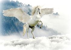 unicorn-2875349_1920.jpg