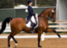 horseshow_left-m54luct92ufw6iac14j2kke88