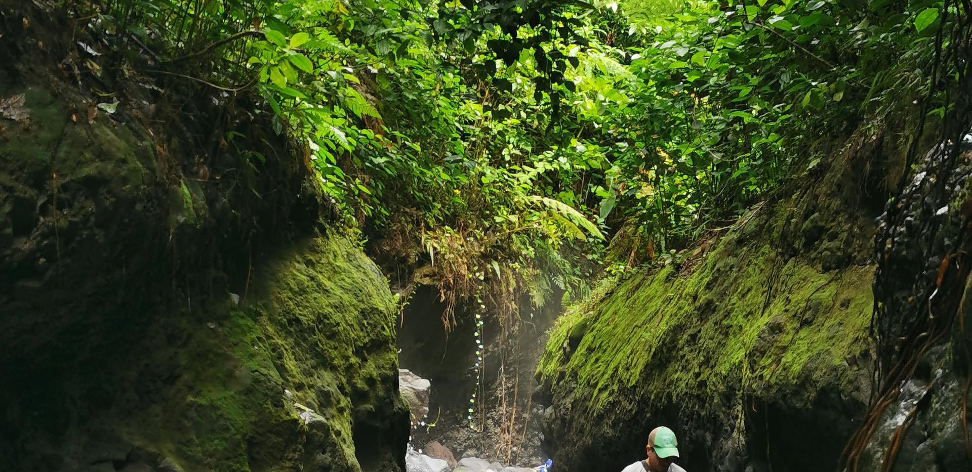 Rainforest 3 con vene.jpg