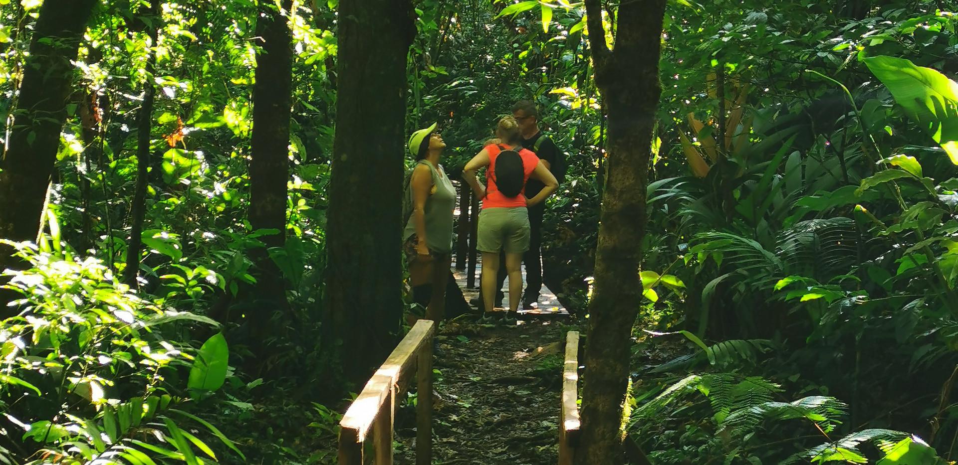 rainforest 4 Bernal.jpg