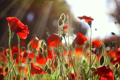 Norie flower photography 花々/Flowers