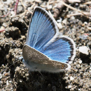 Eros Blue