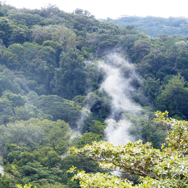 Volcanic Tropical Rainforest