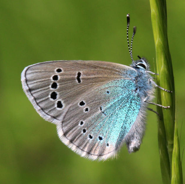 Green-underside Blue