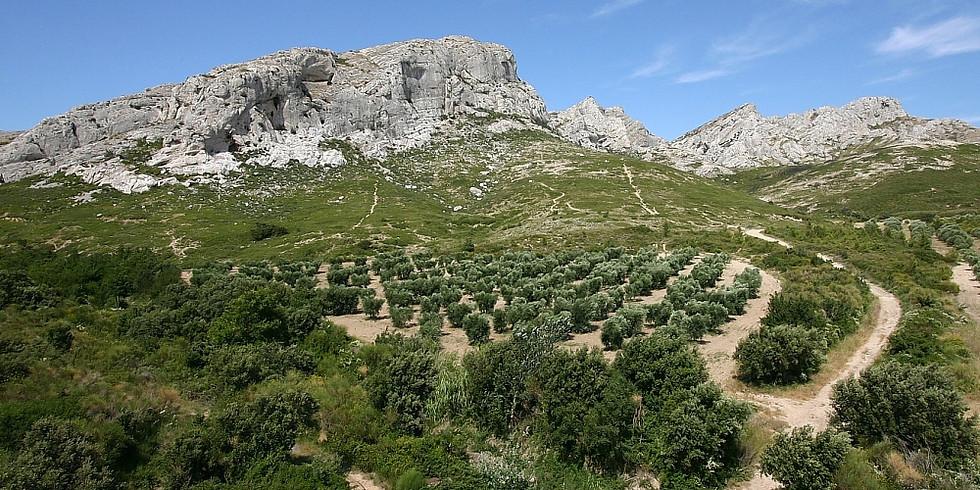 Aureille vignes et oliviers