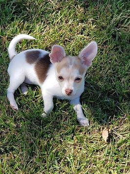 Gigi bambis puppy.jpg
