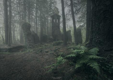 Ruins in the forest - Licciorno