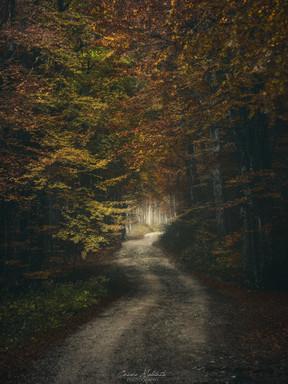 Verso il foliage