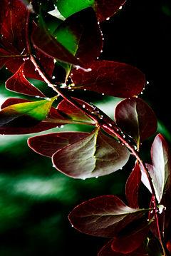 kwiaty 6.jpg