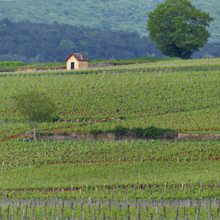 Climats de Bourgogne