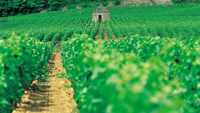 Journées découverte des vins de Bourgogne - du 4 au 25 avril 2020