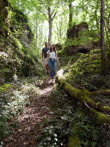 Balades en forêt