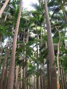 palm grove.jpg