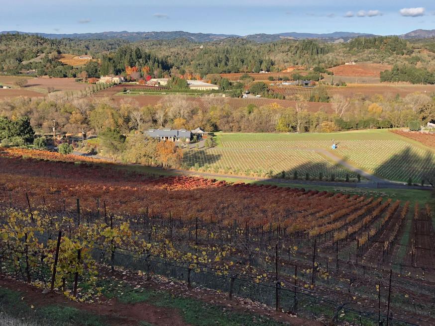 Vineyard-Long-View-Fall-Across-Valley.jp