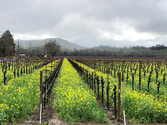 Vineyard-Stormy-Winter.jpg