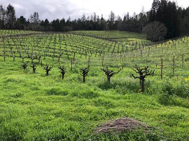 Vineyard-Rolling-Hills-Winter.jpg