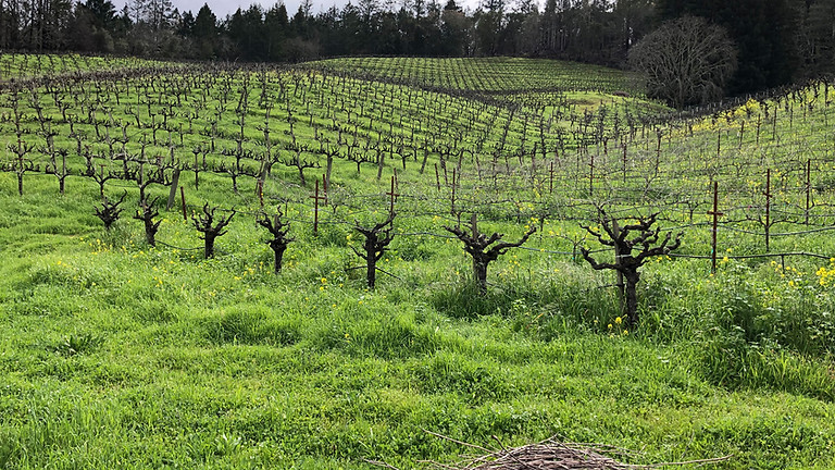 Healdsburg Wine Tours