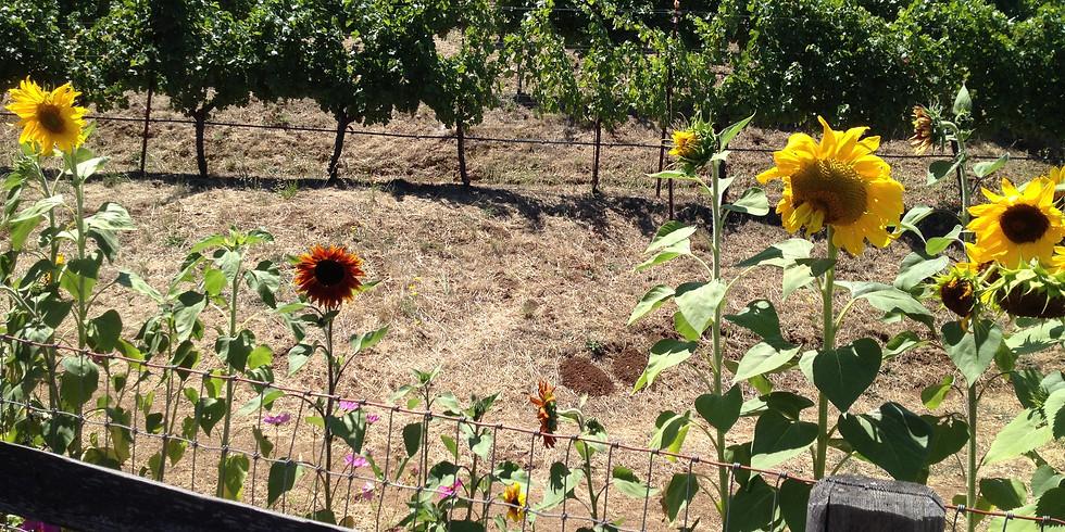 Santa Rosa Wine Tours